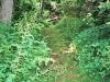 10-Zoar-woods