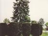 garden-center-tree